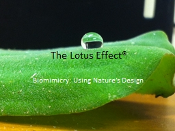 The Lotus Effect® Biomimicry: Using Nature's Design