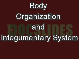 Body Organization and Integumentary System