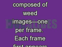 Weed Quiz This set is composed of weed images�one per frame.  Each frame first appears as an