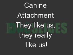 Canine Attachment They like us, they really like us!
