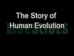 The Story of Human Evolution PowerPoint PPT Presentation