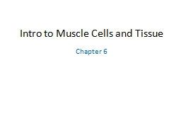 Intro to Muscle Cells and Tissue