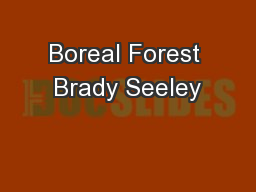 Boreal Forest Brady Seeley