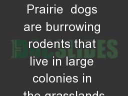 Prarie  dogs Prairie  dogs are burrowing rodents that live in large colonies in the grasslands PowerPoint PPT Presentation