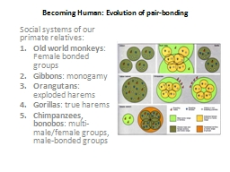 Becoming Human: Evolution of pair-bonding