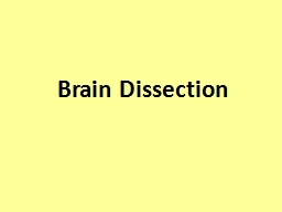 Brain Dissection How to perform a successful