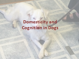 Domesticity and  Cognition in Dogs PowerPoint PPT Presentation