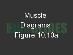 Muscle Diagrams Figure 10.10a