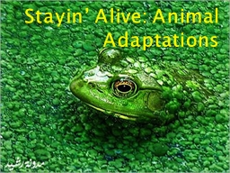 Stayin ' Alive: Animal Adaptations PowerPoint PPT Presentation