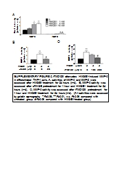 SUPPLEMENTARY FIGURE 2.  rTMD123 attenuates HMGB1-induced