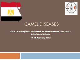 camel diseases GF‐TADs Sub-regional conference on camel diseases, Abu
