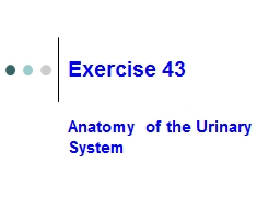Exercise 43 Anatomy of the Urinary System