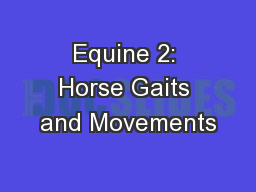 Equine 2: Horse Gaits and Movements
