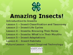 Amazing Insects! Introduction to Insects