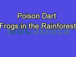 Poison Dart Frogs in the Rainforest