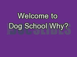 Welcome to Dog School Why?