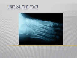 Unit 24: The  Foot Bony Anatomy