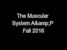 The Muscular System A&P Fall 2016