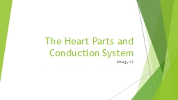The Heart Parts and Conduction System