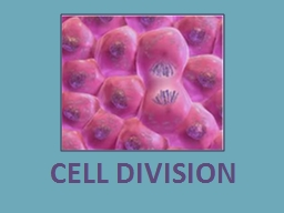 CELL DIVISION According