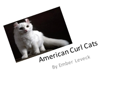 American Curl Cats        By Ember