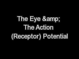 The Eye & The Action (Receptor) Potential PowerPoint PPT Presentation