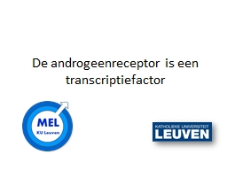 De  androgeenreceptor  is