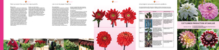CUT FLOWER PRODUCTION OF DAHLIAS PRACTICAL TIPS FOR q