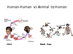Human-Human vs Animal to Human