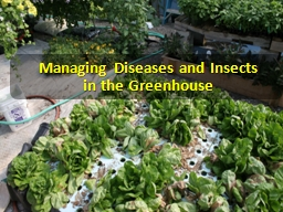 Managing  Diseases and Insects