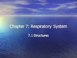 Chapter 7: Respiratory System PowerPoint PPT Presentation