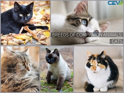 Objectives To examine the popular species of companion cats.