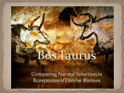 Bos  Taurus Comparing Natural Selection in Ecosystems of Diverse Biomes PowerPoint PPT Presentation