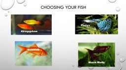 Choosing Your Fish Guppies