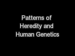 Patterns of Heredity and Human Genetics PowerPoint PPT Presentation