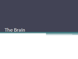 The Brain 1. Which part of the brain is responsible for combining sounds into words and arranging w