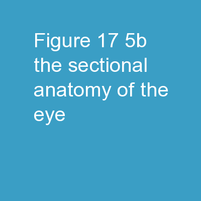 Figure 17-5b The Sectional Anatomy of the Eye.