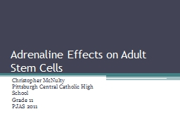Adrenaline Effects on Adult Stem Cells