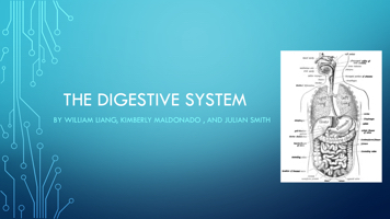 The digestive System By William