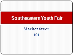 Market Steer 101 Southeastern Youth Fair