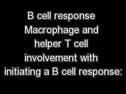B cell response Macrophage and helper T cell involvement with initiating a B cell response: PowerPoint PPT Presentation