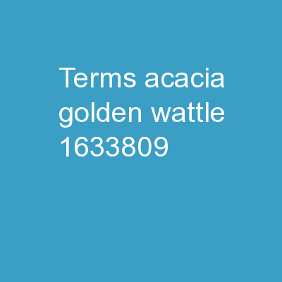 Terms Acacia (Golden Wattle)