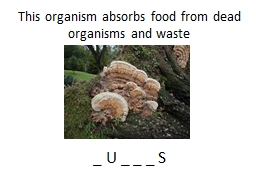 This organism absorbs food from dead organisms and waste
