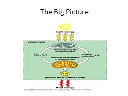 The Big Picture Cellular Respiration - Overview