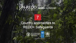 Country approaches to  REDD