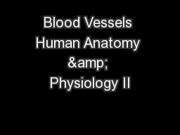 Blood Vessels Human Anatomy & Physiology II