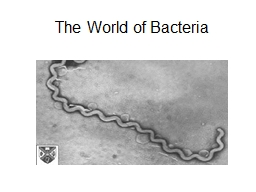 The World of Bacteria What does a bacterium look like? PowerPoint PPT Presentation