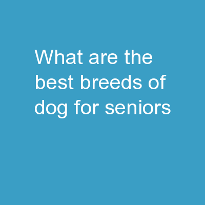 WHAT ARE THE BEST BREEDS OF DOG FOR SENIORS? PowerPoint PPT Presentation