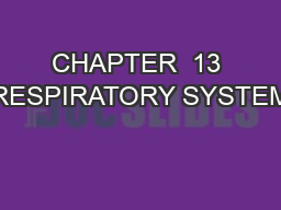 CHAPTER  13 RESPIRATORY SYSTEM