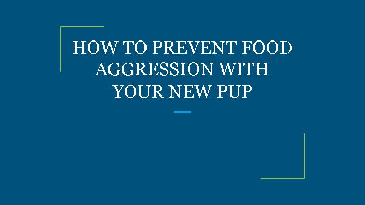 HOW TO PREVENT FOOD AGGRESSION WITH YOUR NEW PUP